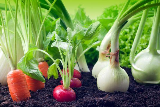 Le bonheur de la récolte est tout proche. Avec 80 % de moins de granulés anti-limaces.